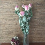dryflower0001